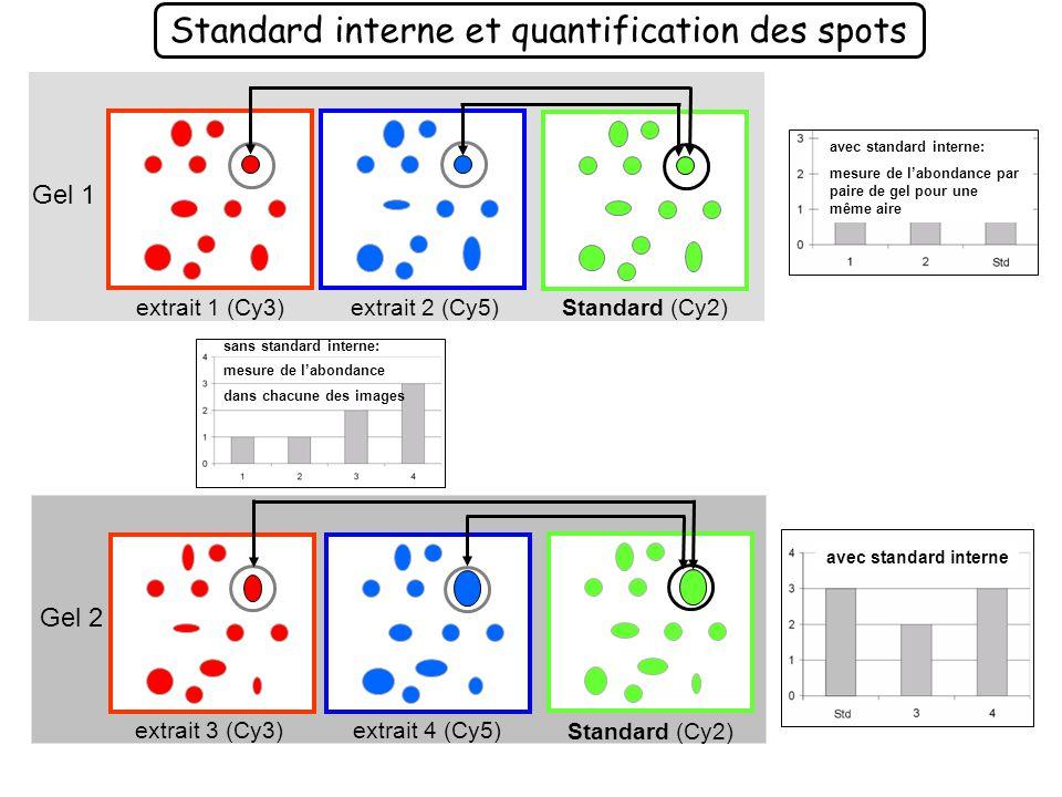 Internal standard and 2 samples per gel Gel 1 Gel 2 Gel 3 Cy2Cy5 Standard Cy2 Standard Cy2 Cy3 extrait 1 extrait 3 extrait 5 Cy3 extrait 2 Cy5 extrait 4 Cy5 extrait 6 Co-détection Intra-gel + Quantification Intra-gel : Differential In-gel Analysis