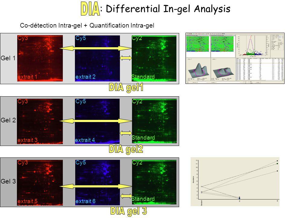 Internal standard and 2 samples per gel Gel 1 Gel 2 Gel 3 Cy2Cy5 Standard Cy2 Standard Cy2 Cy3 extrait 1 extrait 3 extrait 5 Cy3 extrait 2 Cy5 extrait