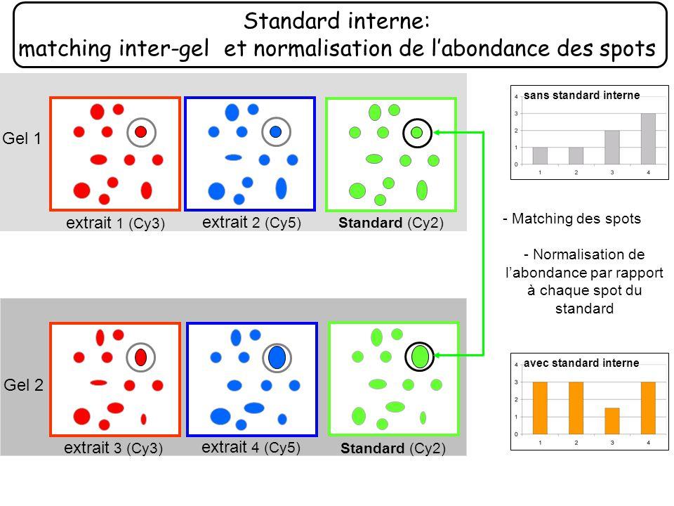 Standard interne: matching inter-gel et normalisation de labondance des spots extrait 2 (Cy5) extrait 1 (Cy3) Gel 1 extrait 3 (Cy3) extrait 4 (Cy5) Ge