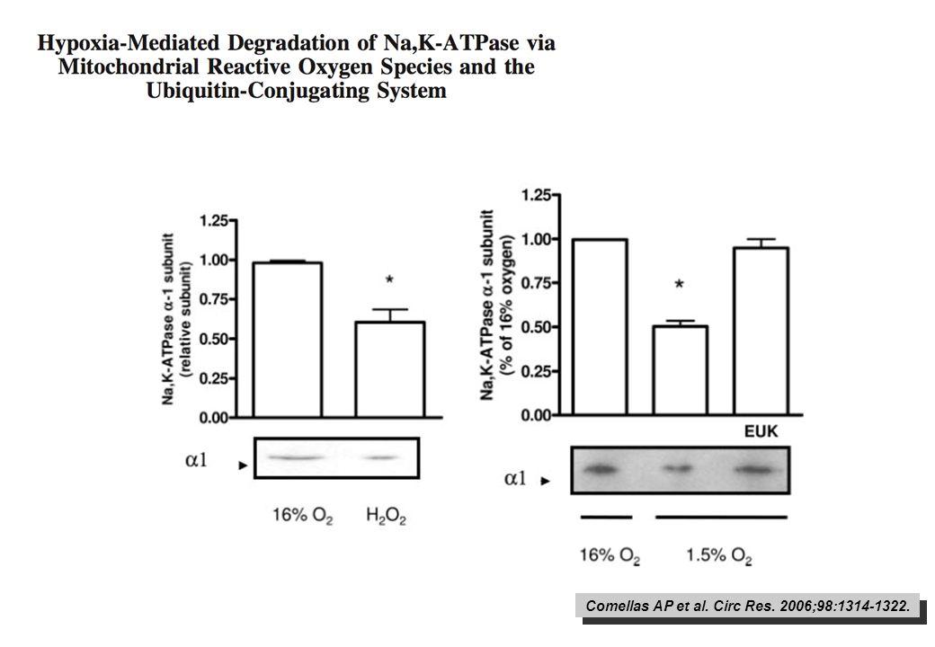 Comellas AP et al. Circ Res. 2006;98:1314-1322.