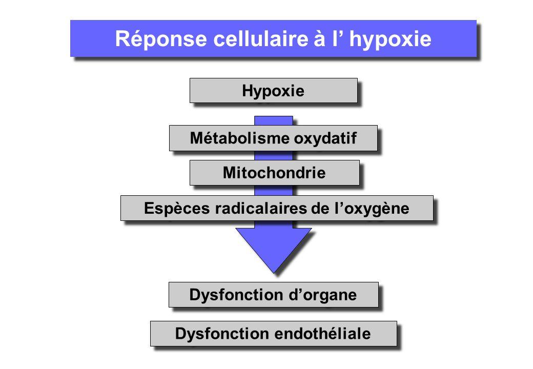 Espèces radicalaires de loxygène Dysfonction dorgane Dysfonction endothéliale Réponse cellulaire à l hypoxie Hypoxie Métabolisme oxydatif Mitochondrie