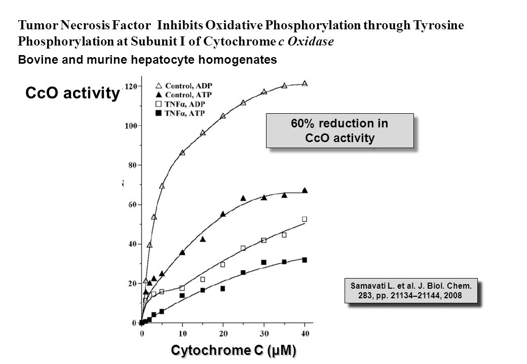 Tumor Necrosis Factor Inhibits Oxidative Phosphorylation through Tyrosine Phosphorylation at Subunit I of Cytochrome c Oxidase Bovine and murine hepatocyte homogenates CcO activity Cytochrome C (μM) 60% reduction in CcO activity 60% reduction in CcO activity Samavati L.
