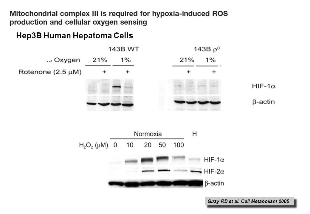Guzy RD et al. Cell Metabolism 2005 Hep3B Human Hepatoma Cells