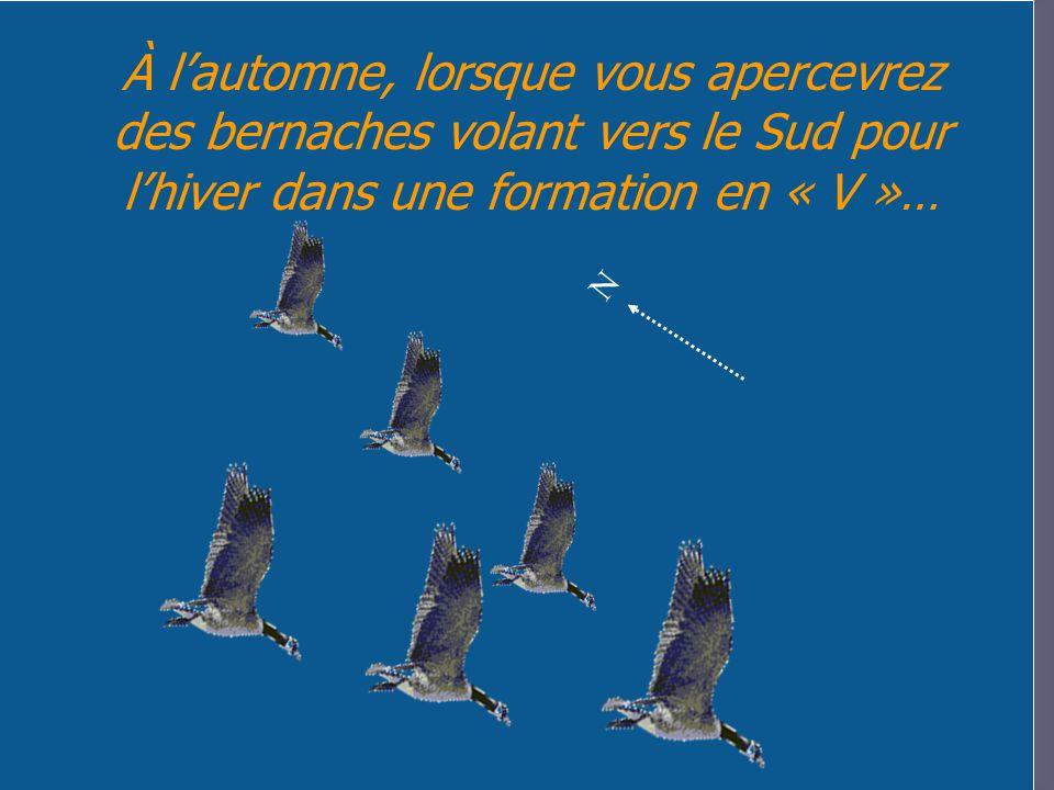 À lautomne, lorsque vous apercevrez des bernaches volant vers le Sud pour lhiver dans une formation en « V »… N