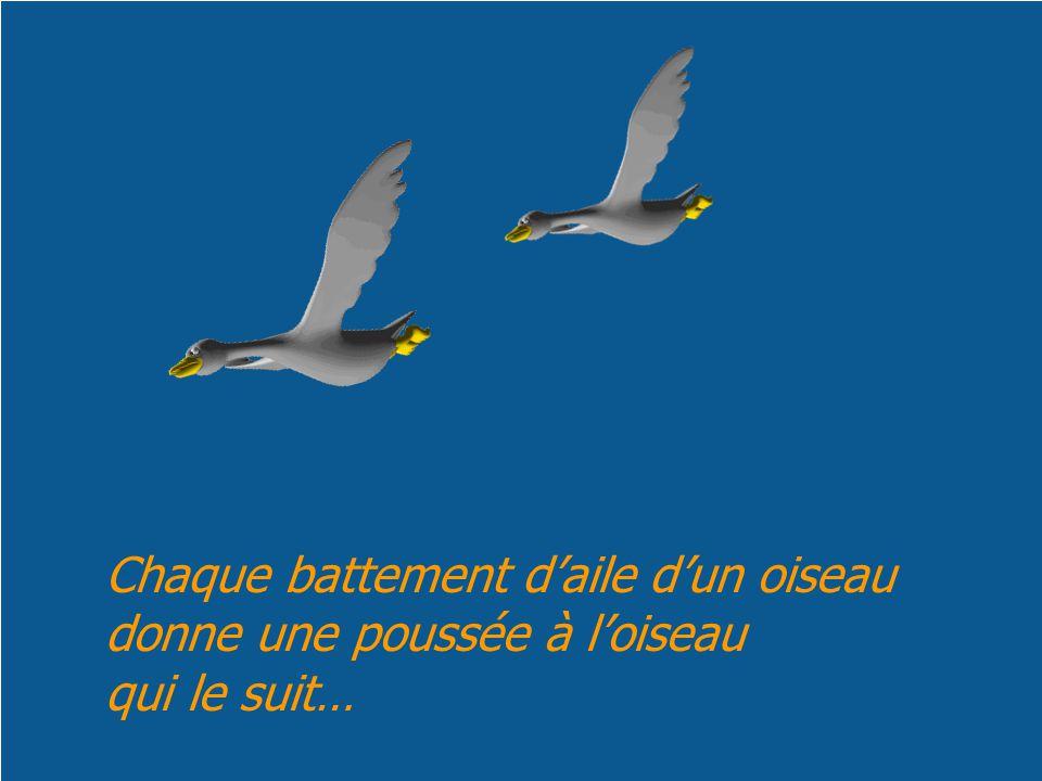 Chaque battement daile dun oiseau donne une poussée à loiseau qui le suit…
