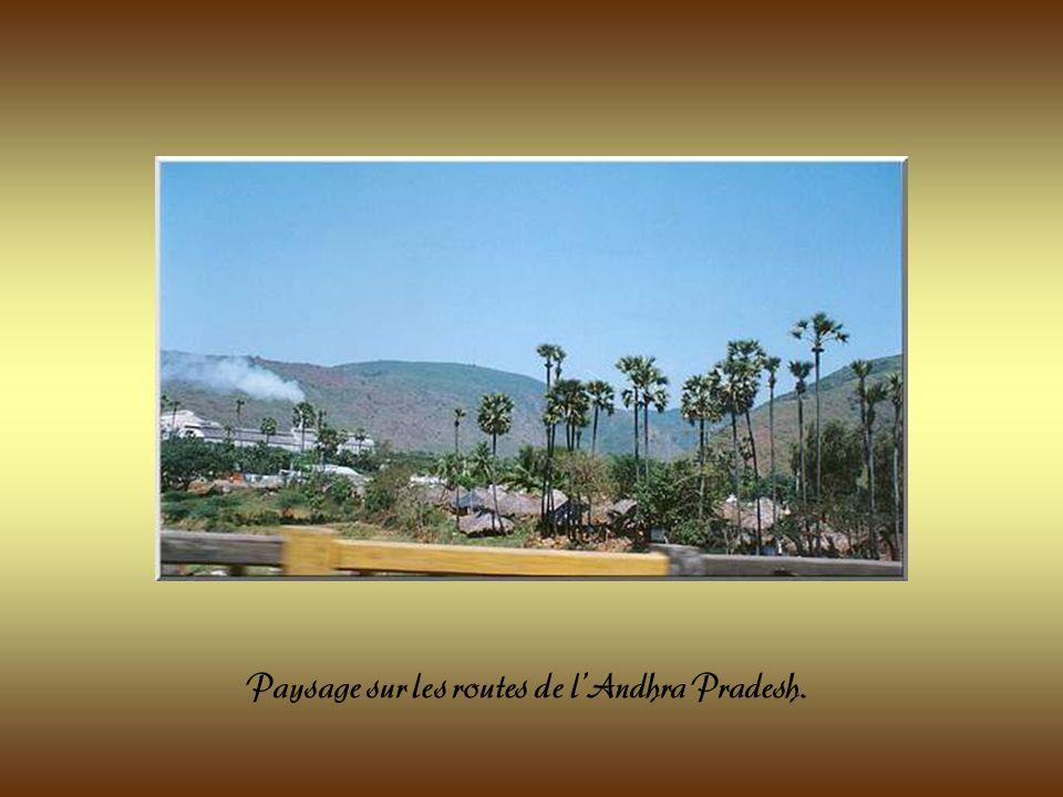La végétation luxuriante, lodeur des épices et le sourire des habitants font de lInde un pays très attachant.