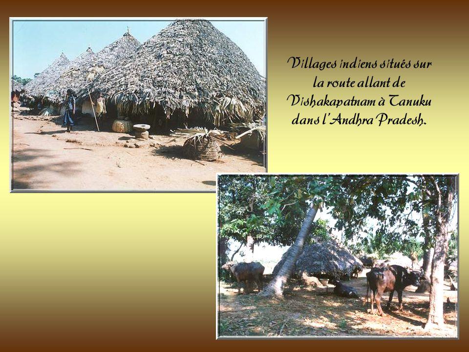 Paysage de lAndra Pradesh.