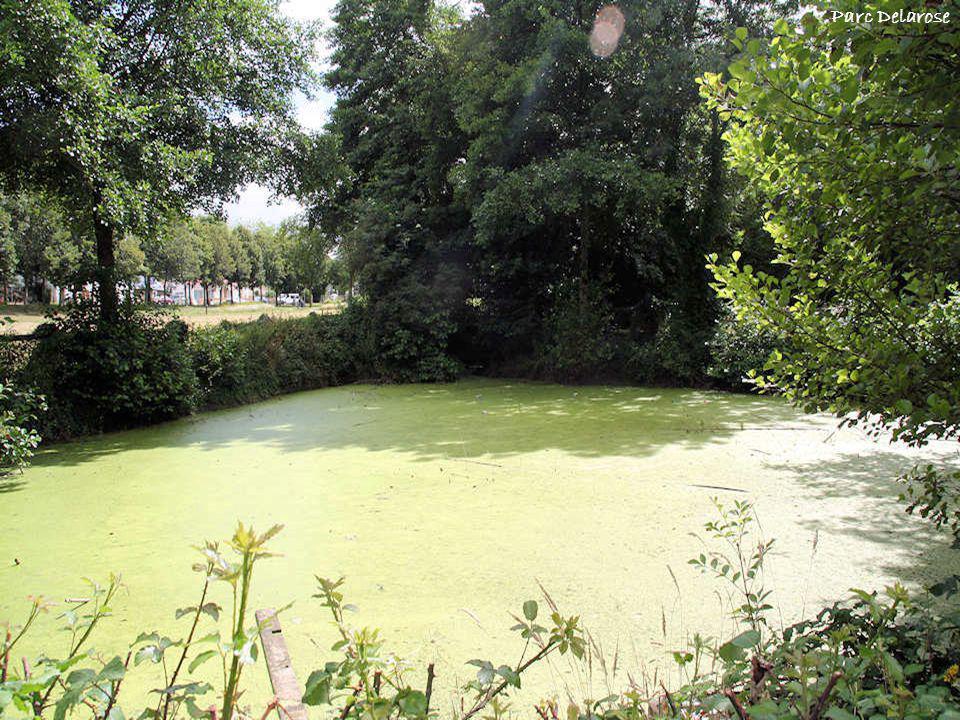 Parc Delarose