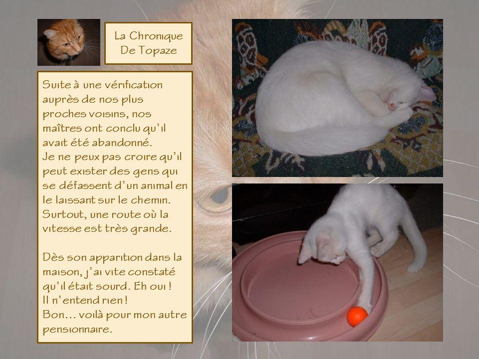 La Chronique De Topaze Par un beau matin de Septembre, ma maîtresse regardant par la fenêtre, aperçoit un petit chat tout blanc qui se gambade au bord