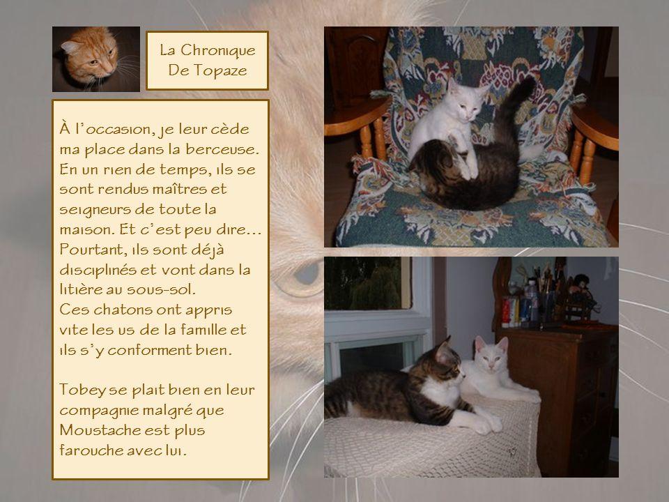 La Chronique De Topaze Javais déjà mis au pas Tobey, ce petit chien que je nomme lIntrus. Ce dernier sest empressé de bien les accueillir. Peut-être d