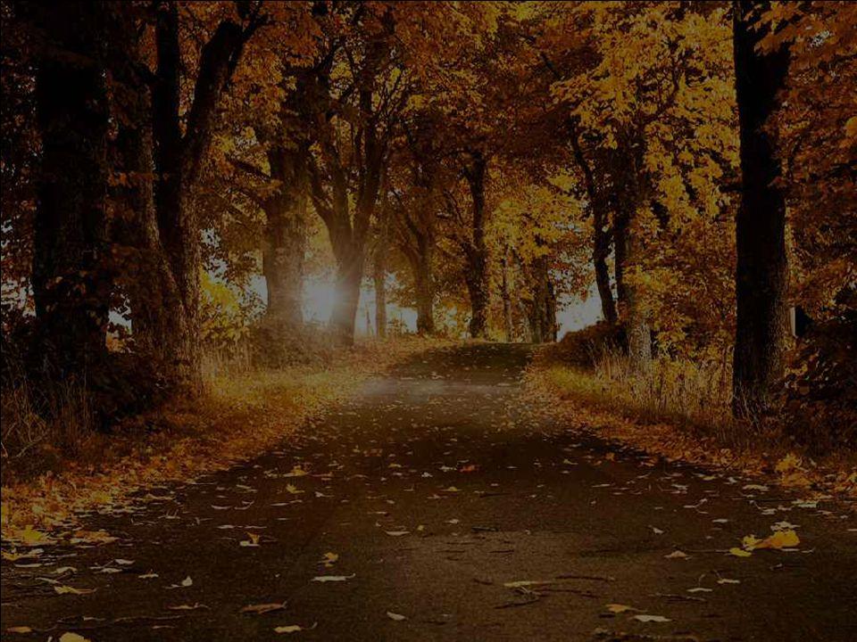 Bel automne ensoleillé, tu nous réjouis de bonheur… Comme de belles promenades dans les forêts… Là où l'air est pur et qu'elle m'apporte une bonne ode