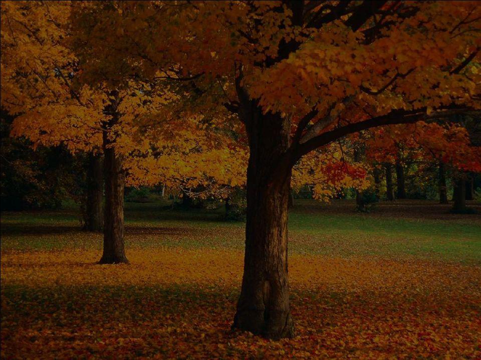 J'étais émerveillée de regarder tous les arbres teintés avec autant de gaité… Ils se sont vêtus de leurs plus beaux atouts et de leurs plus beaux sour