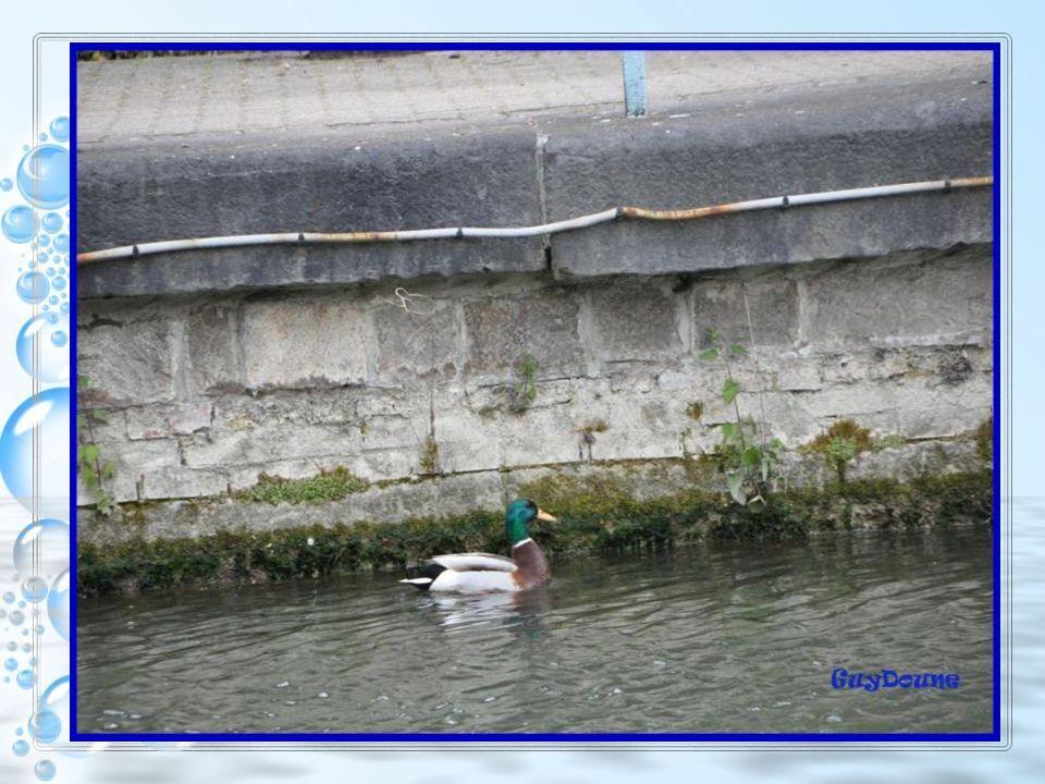 Certaines écluses ont subsisté jusquà laménagement des quais et ont ensuite été supprimées peu à peu. Devenues inutiles la navigation se faisait de pl