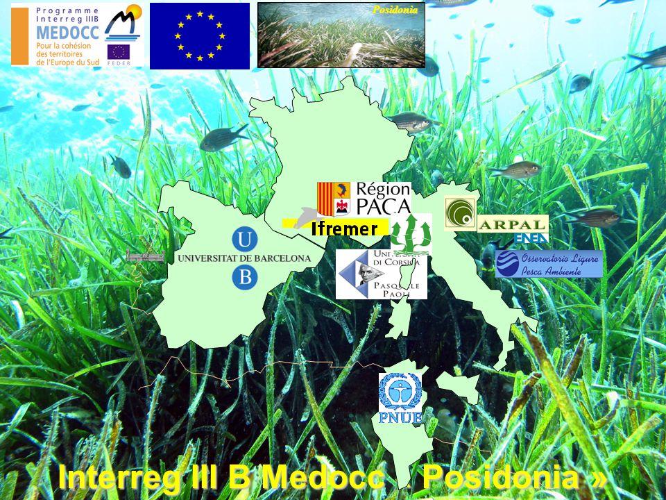 Interreg III B Medocc « Posidonia » Posidonia