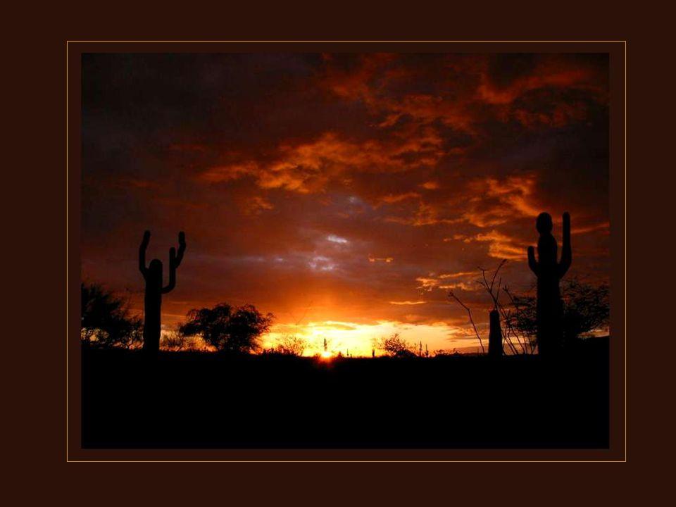 L'Arizona possède plusieurs déserts aux climats différents. Le plus connu est celui de la Sonora. On y trouve les fameux cactus saguaro. Ils y poussen
