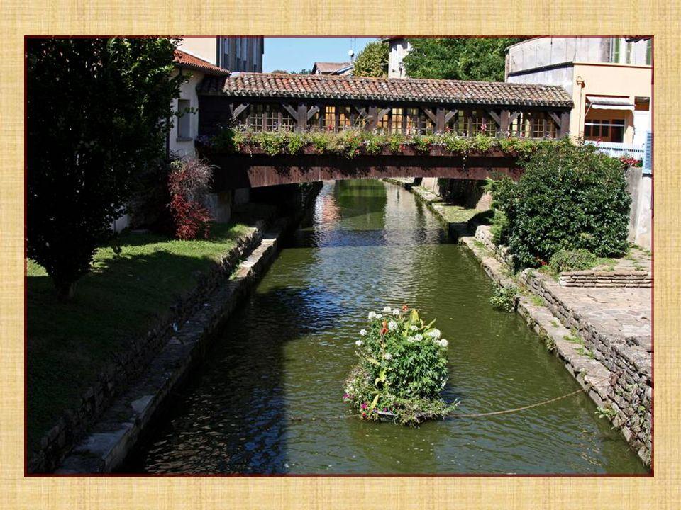 Rivière La Chalaronne