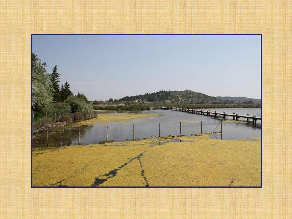La Mairie de Peyriac-de-Mer a fait construire des pontons qui permettent de se promener au-dessus de létang du Doul.