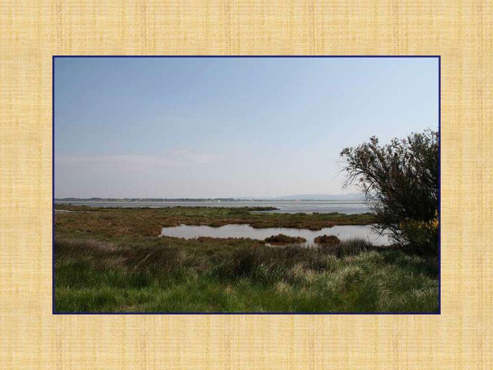 Les étangs de Bages sont situés au sud de Narbonne, près de Sigean, dans le département de lAude.