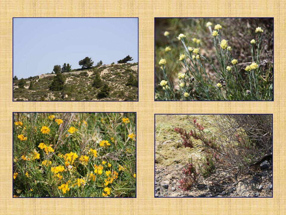 Joli parcours sur terre qui permet dadmirer la flore très variée.