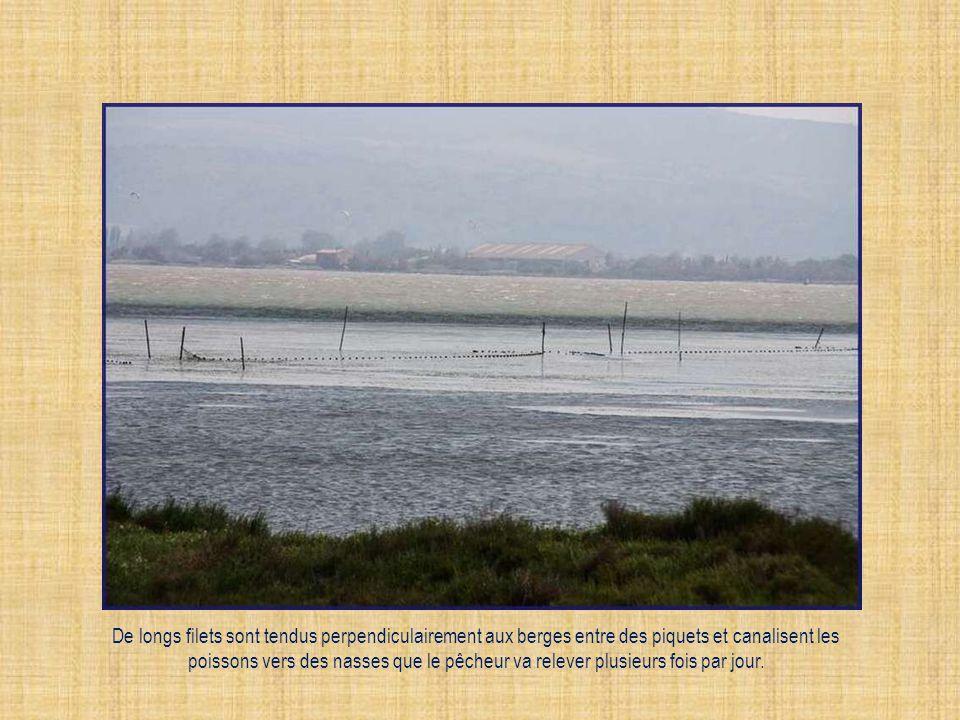 De longs filets sont tendus perpendiculairement aux berges entre des piquets et canalisent les poissons vers des nasses que le pêcheur va relever plusieurs fois par jour.