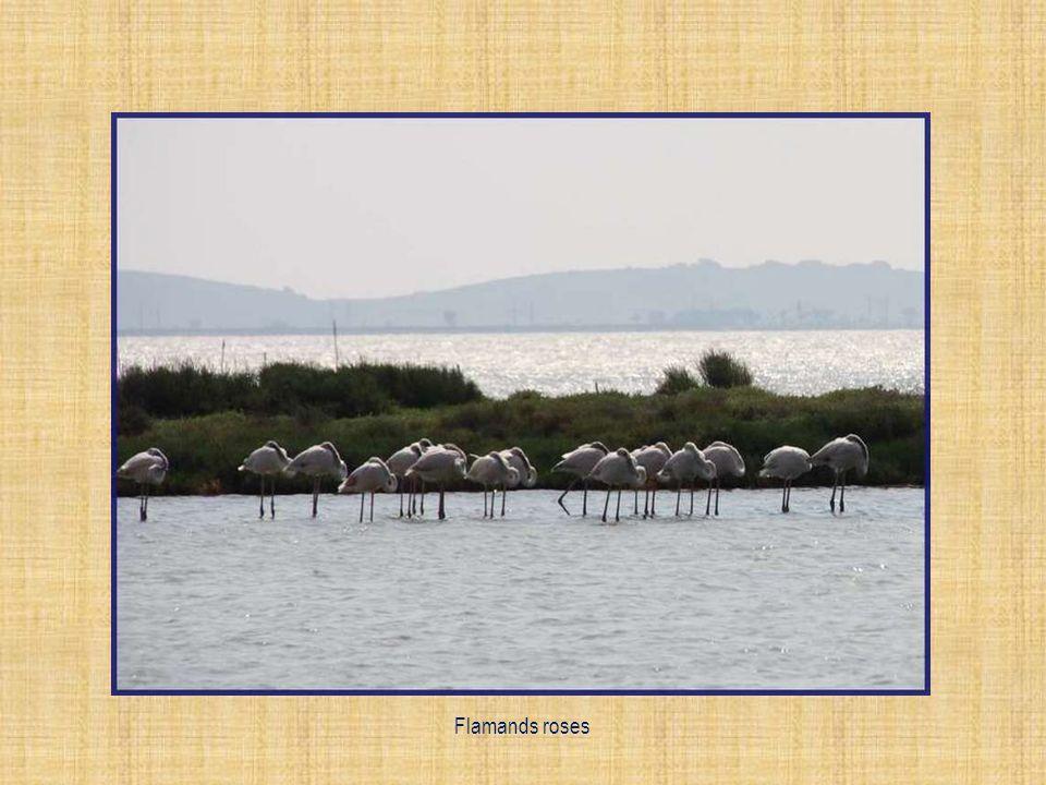 La colline de droite est réservée aux oiseaux pour leurs nidifications.