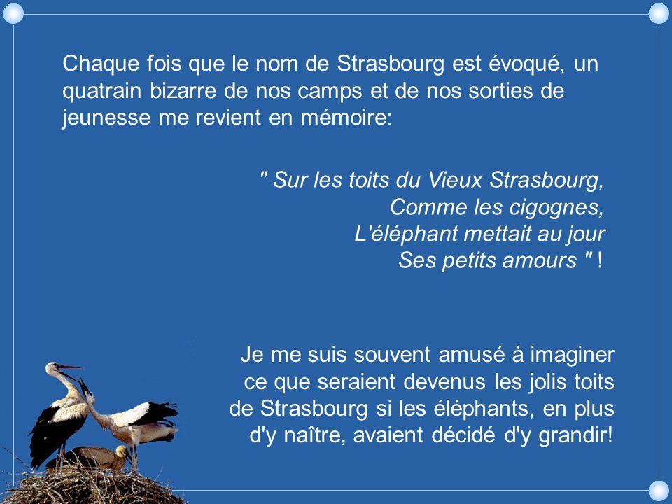 Sur les toits du Vieux Strasbourg, Comme les cigognes, L éléphant mettait au jour Ses petits amours .