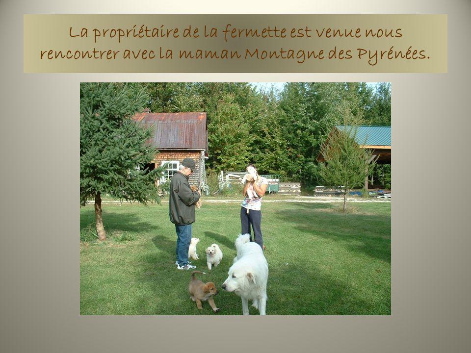 La propriétaire de la fermette est venue nous rencontrer avec la maman Montagne des Pyrénées.