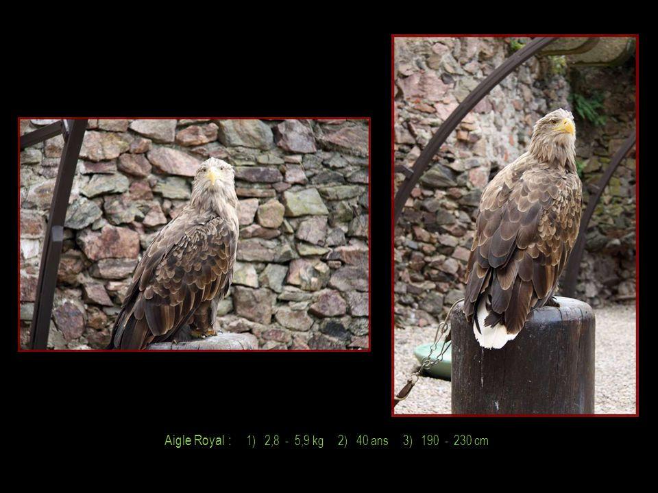 Faucon Fauve : 1) 6,0 - 9,0 kg 2) 45 ans 3) 240 - 280 cm