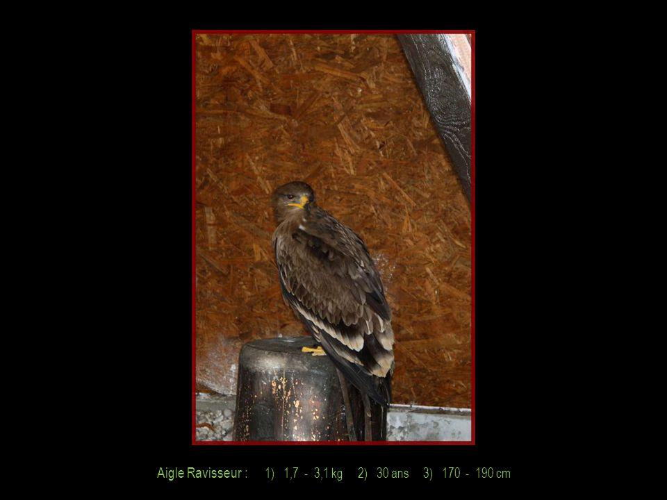 Aigle Bateleur : 1) 1,8 - 3,0 kg 2) 35 ans 3) 185 cm