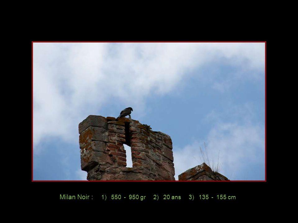 Photos personnelles et création de Rosemarie Octobre 2011 Musique: Billy Vaughn El Condor Pasa Renseignements pris sur place.