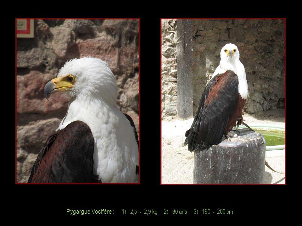 Aigle Royal : 1) 2,8 - 5,9 kg 2) 40 ans 3) 190 - 230 cm