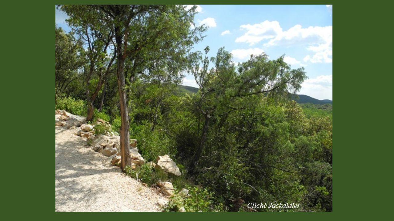 Cliché Jackdidier Depuis le parking dans un espace naturel préservé, un sentier ombragé dans la nature, donne accès au site. (700m et dénivelé 7%)