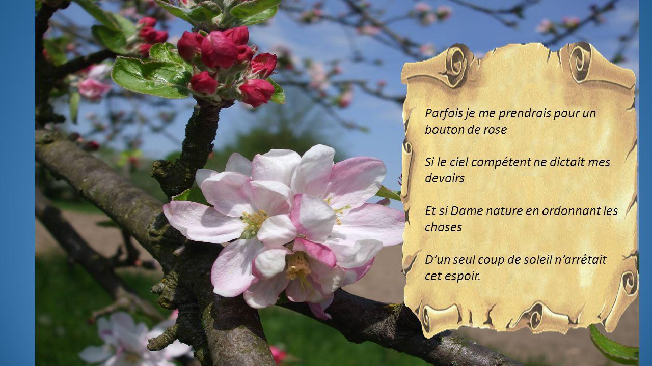 FLEUR DE POMMIER Texte de Simone Robert, proposé par Jackdidier