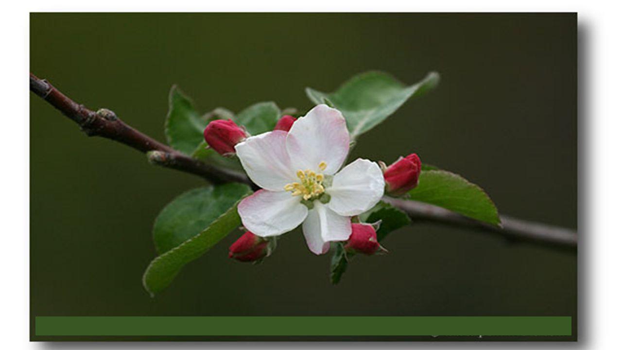 Dailleurs, pourquoi vouloir des fleurs être la reine, En mettre plein la vue, briller dans les Salons, Ressembler au velours ou à la porcelaine, Avoir