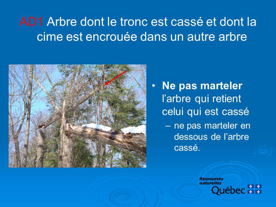 AD1 Arbre dont le tronc est cassé et dont la cime est encrouée dans un autre arbre Ne pas marteler larbre qui retient celui qui est cassé –ne pas mart