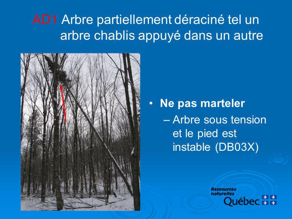 AD1 Arbre partiellement déraciné tel un arbre chablis appuyé dans un autre Ne pas marteler –Arbre sous tension et le pied est instable (DB03X)