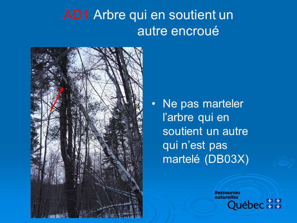 AD1Arbre qui en soutient un autre encroué Ne pas marteler larbre qui en soutient un autre qui nest pas martelé (DB03X)