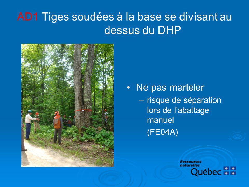 AD1 Tiges soudées à la base se divisant au dessus du DHP Ne pas marteler –risque de séparation lors de labattage manuel (FE04A)