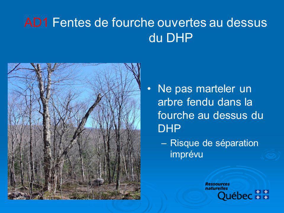 AD1 Fentes de fourche ouvertes au dessus du DHP Ne pas marteler un arbre fendu dans la fourche au dessus du DHP –Risque de séparation imprévu