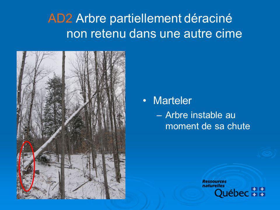AD2 Arbre partiellement déraciné non retenu dans une autre cime Marteler –Arbre instable au moment de sa chute