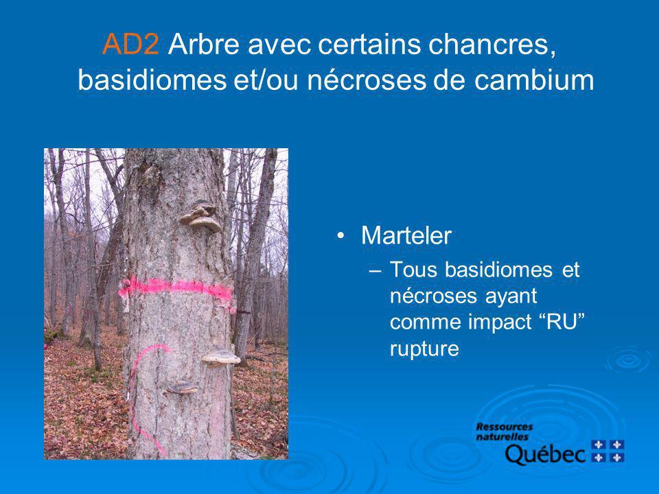 AD2Arbre avec certains chancres, basidiomes et/ou nécroses de cambium Marteler –Tous basidiomes et nécroses ayant comme impact RU rupture