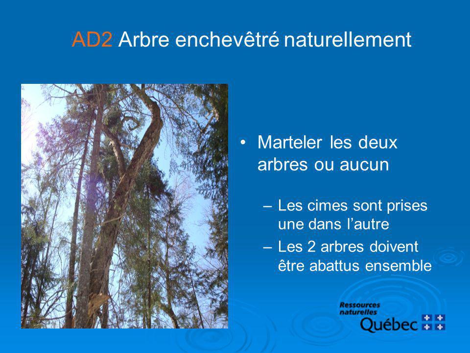 AD2 Arbre enchevêtré naturellement Marteler les deux arbres ou aucun –Les cimes sont prises une dans lautre –Les 2 arbres doivent être abattus ensembl