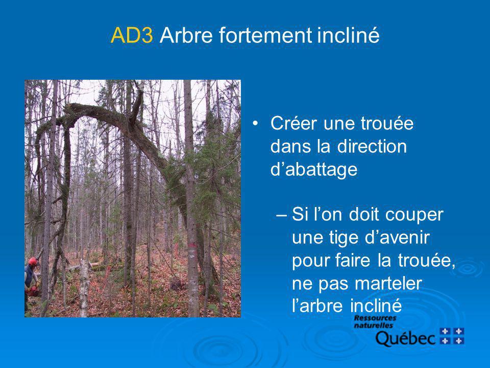 AD3Arbre fortement incliné Créer une trouée dans la direction dabattage –Si lon doit couper une tige davenir pour faire la trouée, ne pas marteler lar