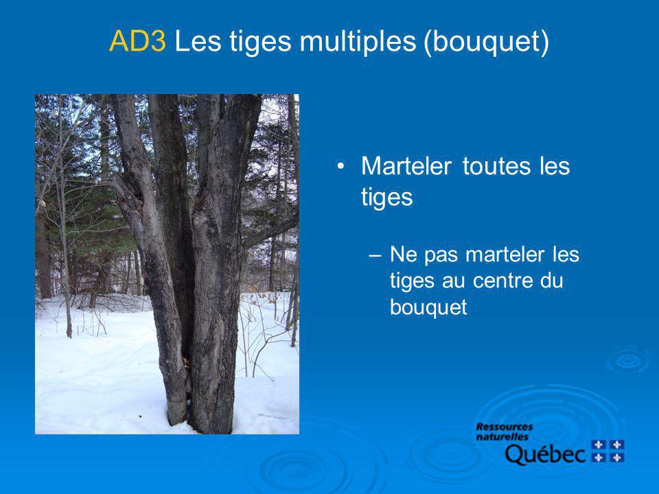 AD3 Les tiges multiples (bouquet) Marteler toutes les tiges –Ne pas marteler les tiges au centre du bouquet