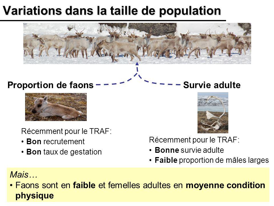 18 Variations dans la taille de population Mais… Faons sont en faible et femelles adultes en moyenne condition physique Proportion de faonsSurvie adul
