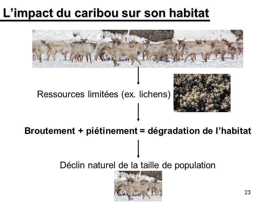 23 Limpact du caribou sur son habitat Ressources limitées (ex. lichens) Broutement + piétinement = dégradation de lhabitat Déclin naturel de la taille
