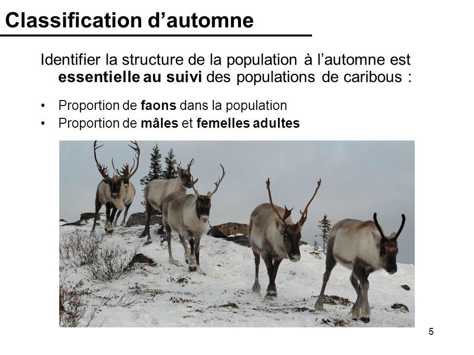 5 Classification dautomne Identifier la structure de la population à lautomne est essentielle au suivi des populations de caribous : Proportion de fao