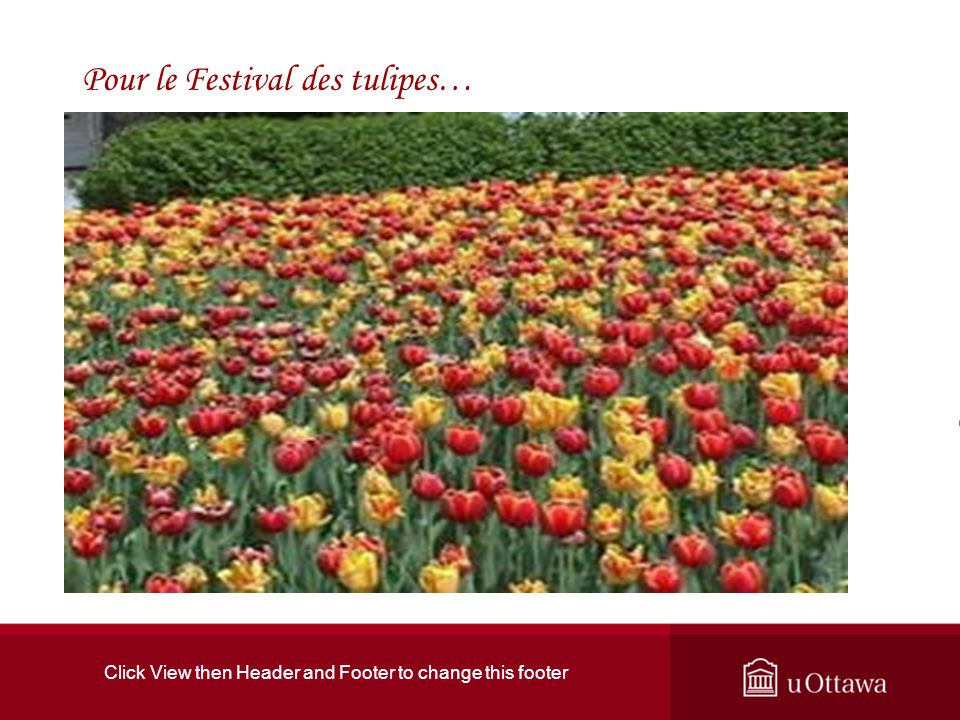 Click View then Header and Footer to change this footer Pour le Festival des tulipes…