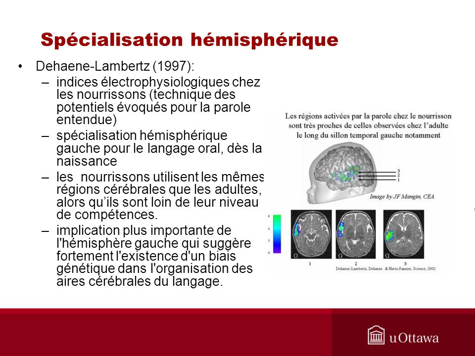 Spécialisation hémisphérique Dehaene-Lambertz (1997): –indices électrophysiologiques chez les nourrissons (technique des potentiels évoqués pour la pa