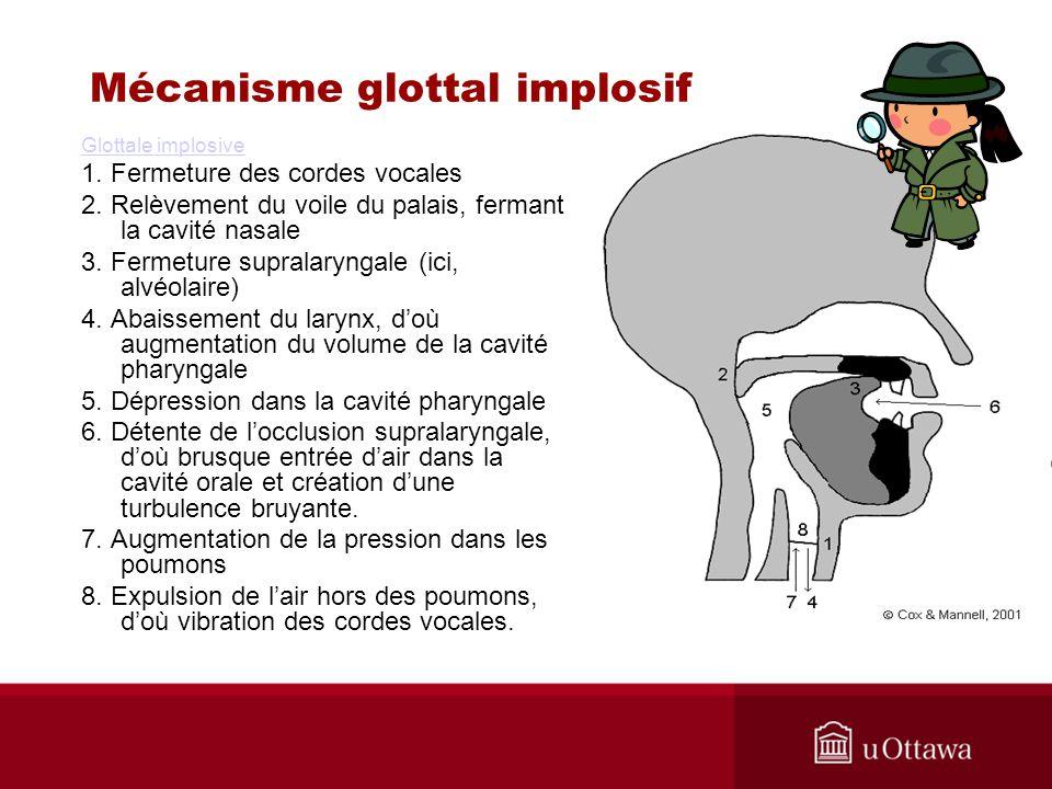 Mécanisme glottal implosif Glottale implosive 1. Fermeture des cordes vocales 2. Relèvement du voile du palais, fermant la cavité nasale 3. Fermeture